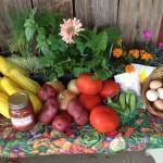 New Farmers Market in Batesville