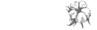 cotton-company-email-signature